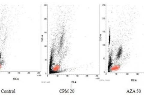 Facs parent plots of lymphocytes for control, CPM 20 and AZA 50