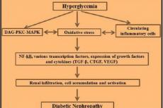 The induction and progression of diabetic nephropathy